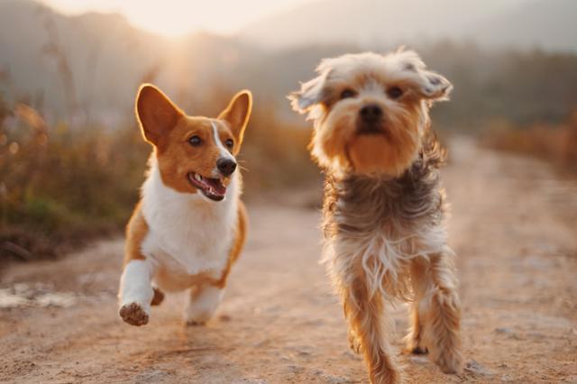 威信城区禁止遛狗引发热议 是规范养狗还是禁止养狗?