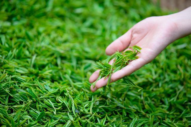 云品丨2020滇茶杯第三届云南名茶评比大赛将于12月举行