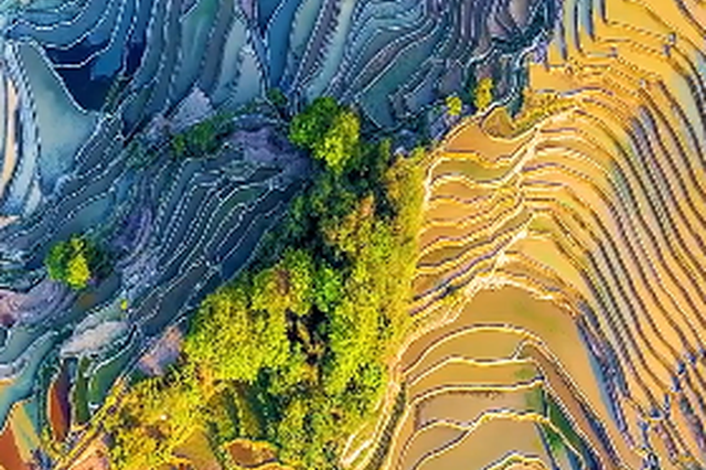 视频丨云南元阳梯田 地球上最美的七彩镜