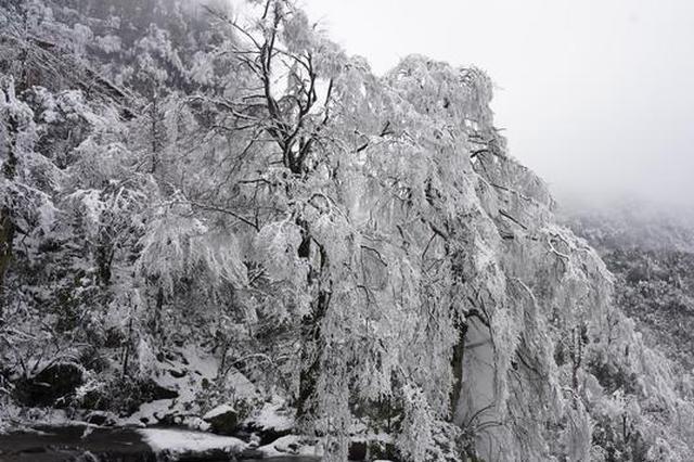 高清图丨彝良小草坝:冰瀑雾凇相映白,美出天际醉游人