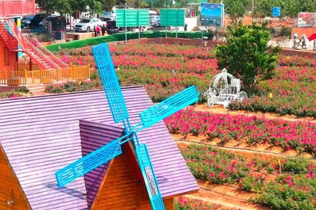 云南安宁:玫瑰花田里的芬芳之旅