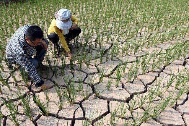 应急管理部:云南旱情或进一步发展