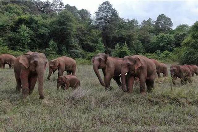 """这里是云南,""""象""""往的地方"""