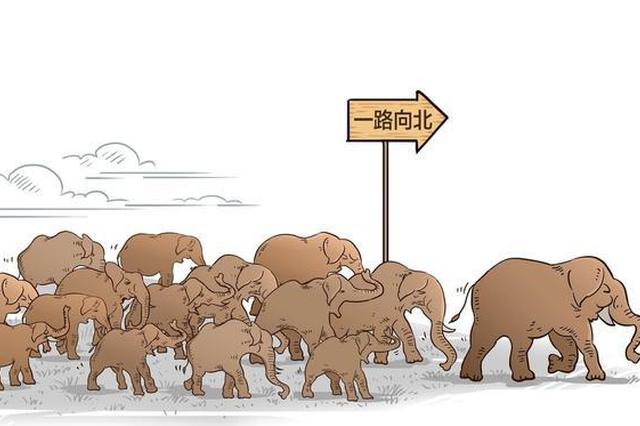 象群北上,云南以爱竭力守护