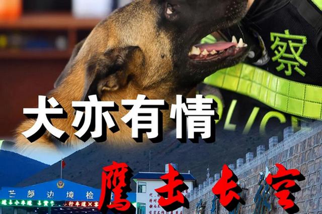 犬亦有情 鹰击长空,云南警犬驰骋禁毒战场