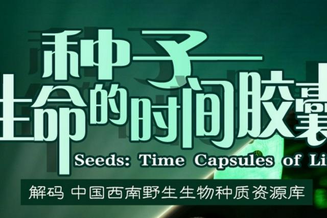 种子:生命的时间胶囊丨微博大V@植物眼 带你解码中国西南野生