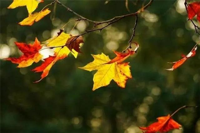 昆明最低气温降至16℃ 早晚时段更感秋凉