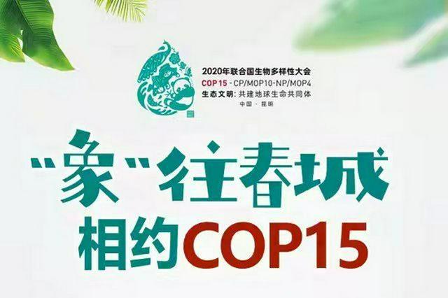 """【""""象""""往春城 相约COP15】 150→300,""""萌萌象""""和同伴经历"""