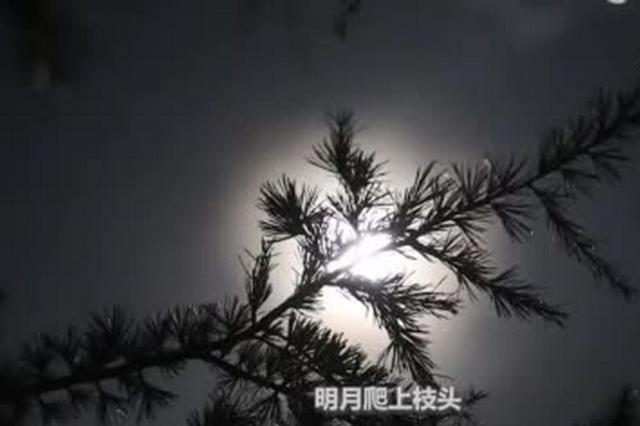云南澄江:明月松间照 苍茫云海间