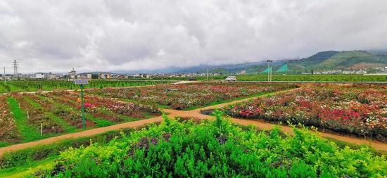 万亩生态观光农业园玫瑰园