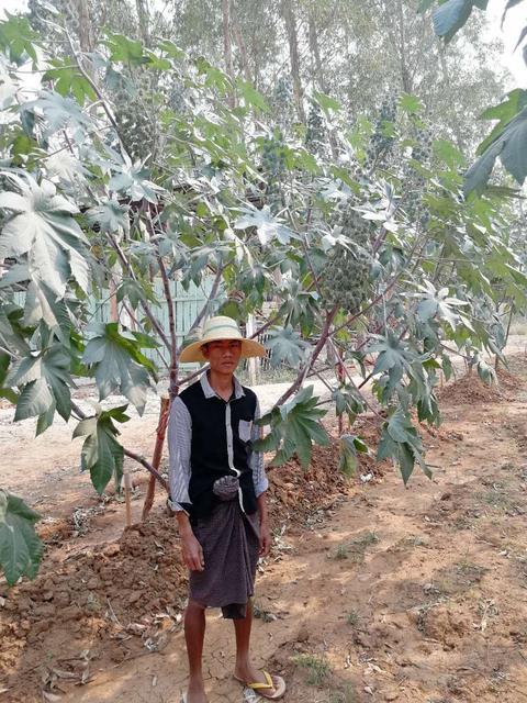 缅甸曼德勒示范基地现场