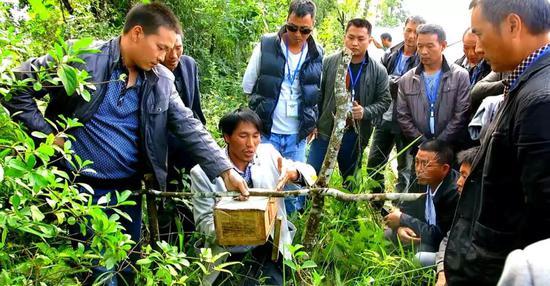 胡蜂林间养殖技术培训
