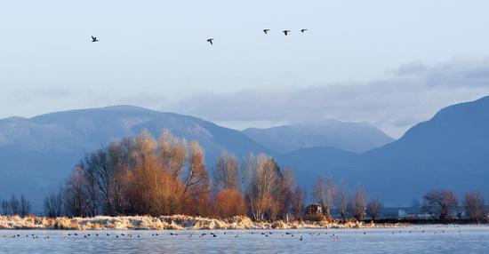 剑湖已经成为西南高原上一处候鸟的天堂。苏金泉摄影。