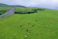东山草原:延伸到迷人的惊喜里