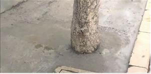 被水泥封住的树池