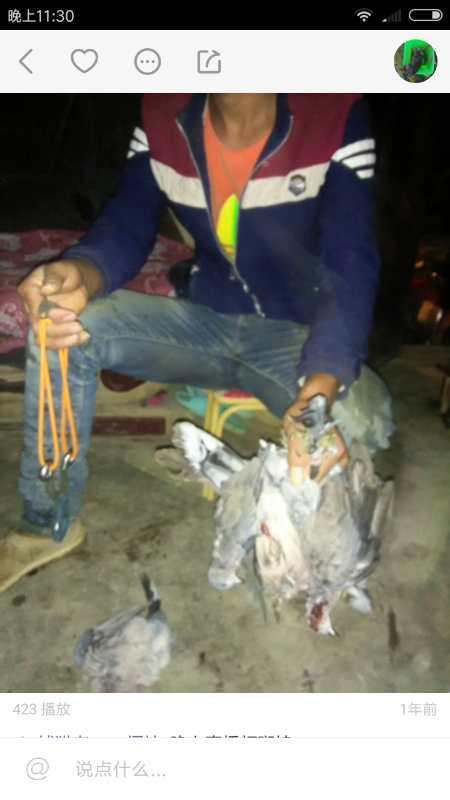嫌疑人在直播上展示捕获的猎物。截图