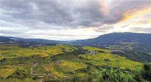 万亩梯田上的稻谷成熟了,在阳光的照射下越发耀眼。