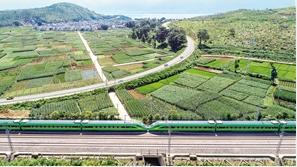 绿色的复兴号驰骋在绿色的大地上 通讯员 陈畅 摄