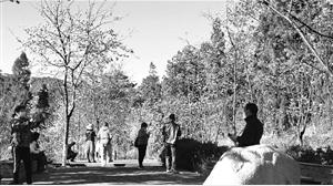 郊野公园,樱花初开。