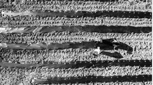 昭通市昭阳区靖安西魁梁子马铃薯种植基地复工复产 通讯员 柴峻峰 摄