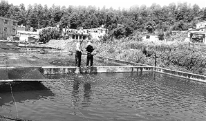 杨君兴在土著鱼类人工繁殖基地观察鱼类