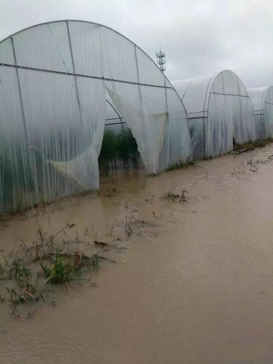洪涝致曲靖马龙区王家庄街道大棚蔬菜受灾