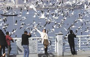 白色的精灵与美丽的城市融为一体,成了昆明的活名片。本报记者 周灿 摄