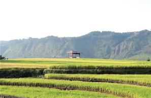 田房点缀在稻田间,蓝天白云下一幅美丽画卷展示在眼前。