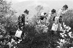 祥云县下庄镇大渡槽三鸭坡发生山林火灾,救援官兵翻山运水清理余火。