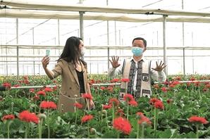 """""""我们泸西的花,品质过硬、花型好看、价格实在。更重要的是,科技含量高……"""" ——泸西县县长莫伟"""