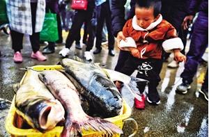 刚上市的大鱼