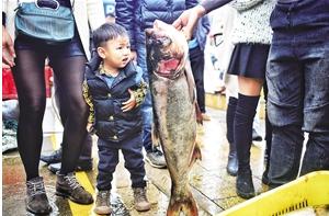 这条鱼立起来和4岁娃娃一般高