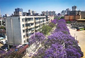 初夏时节花朵盛放,整条道路笼罩在蓝紫色的花海之中。