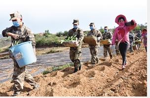 曲靖马龙区民兵帮扶村民栽种浇灌烟苗 通讯员 钱梅清 摄
