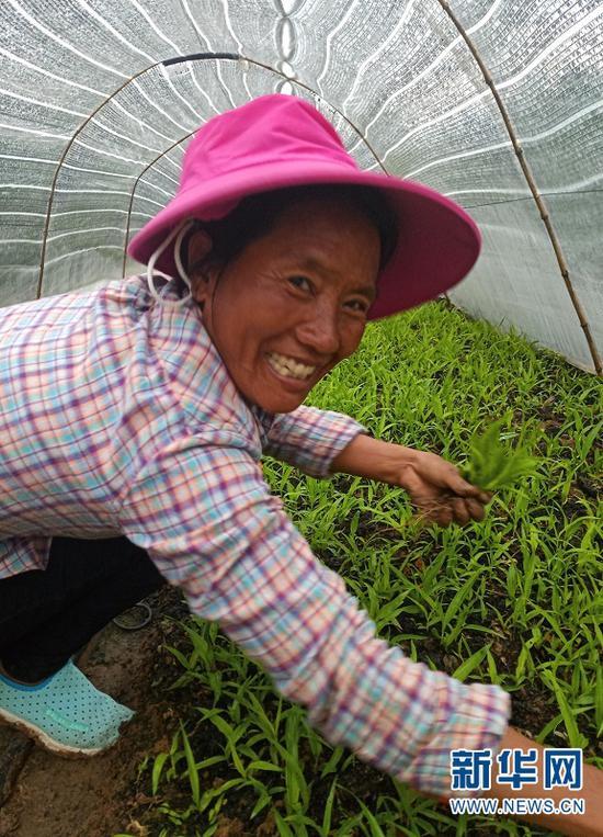 村民在种植基地工作