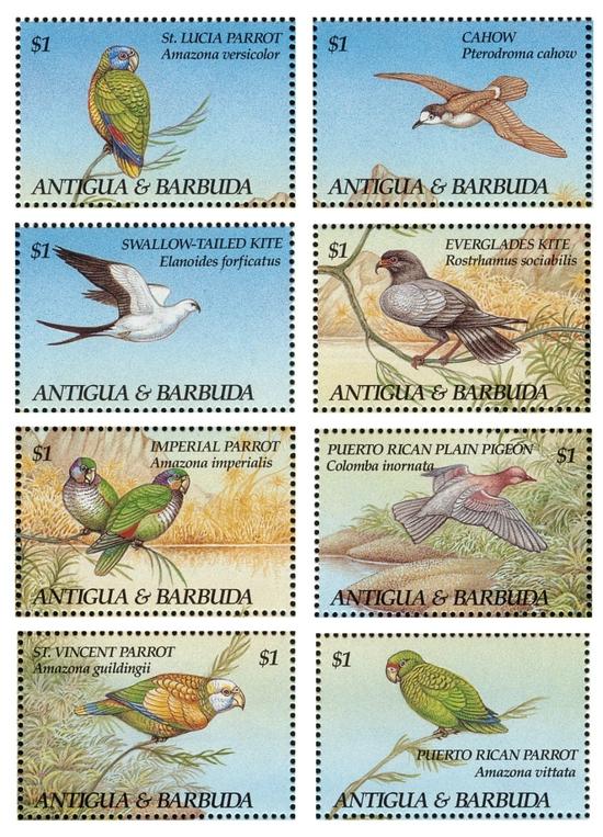 安提瓜和巴布达1993年4月5日发行《濒危物种》邮票。鸟类依次为:圣卢西亚鹦哥、百慕大圆尾鹱、燕尾鸢、食螺鸢、帝王鹦哥、纯色鸽、圣文森特鹦哥、波多黎各鹦哥。