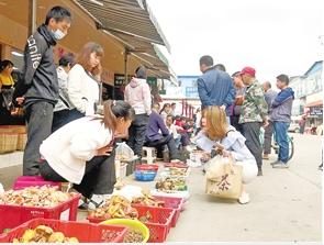 云南木水花野生菌交易市场 每天约1吨野生菌上市 价格有所回落