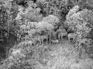 云南北移亚洲象群进入新平县 独象仍在红塔区