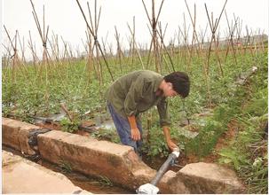 元谋县架设抗旱引水管道灌溉蔬菜地 通讯员 杨修明 摄