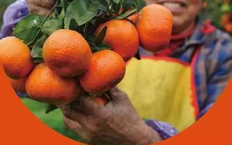 云南多渠道解决农产品滞销问题