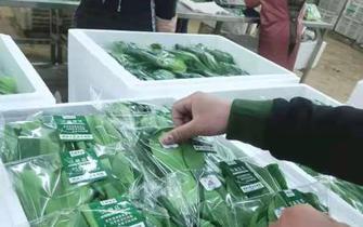 云南小包装蔬菜上线孔雀码平台