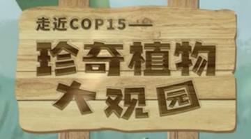 """绘说雨林——珍奇植物""""大观园"""""""
