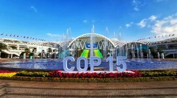 昆明公交开行4条专线直达COP15会场