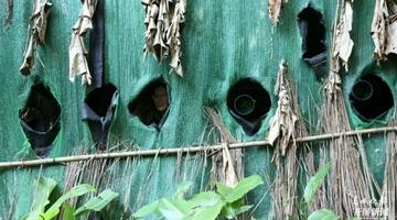 西双版纳这个县成拍鸟摄影师打卡地!