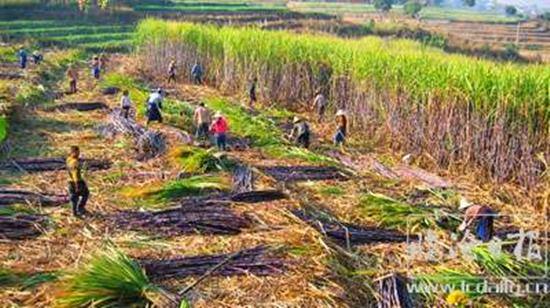 云南临沧双江构建多种产业帮扶模式助脱贫