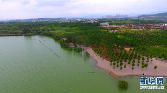 图为滇池之滨的生态修护工程。