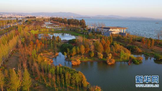 图为滇池湖畔的海东湿地。