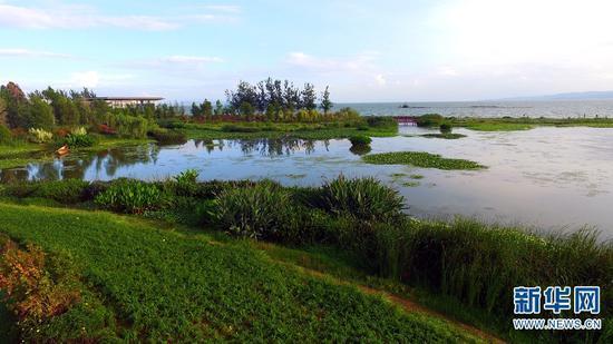 滇池沿岸的生态湿地。