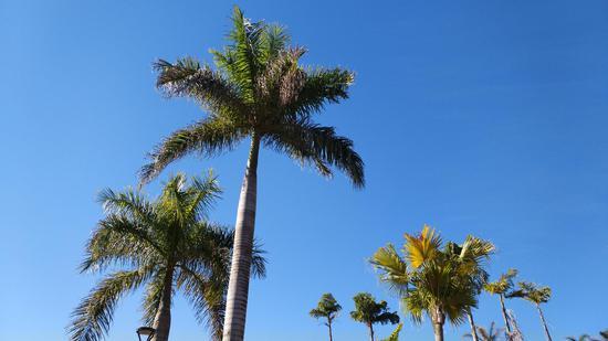 五龙湖景的蓝天树影