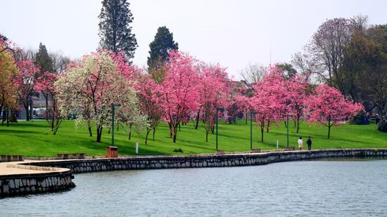 春暖石林湖